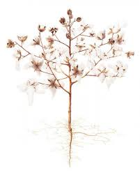 Hillary Parker | American Society of Botanical Artists