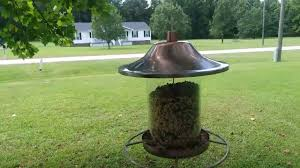 The Best Squirrel Baffles For Any Situation 11 Ideas Bird Watching Hq