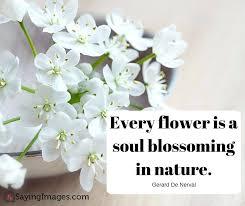 happy birthday flowers quotes com