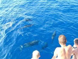 schwimmen mit delfinen in hurghada