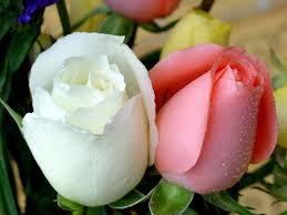 صور زهور زهور طبيعية و صناعية صباح الورد