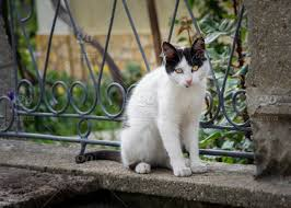 Beautiful Black And White Cat Playing At The Fence Of The House Beautiful Eyes Playful Cat Bench In Front Kitty Kitten Background Outdoor Green Lying Down Beauty Home House Living Nature