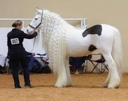 اجمل حصان في العالم افضل صور خيول بالدنيا حبيبي