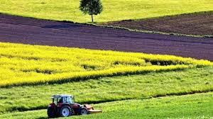 Прокуратура повернула у розпорядження держави земельну ділянку сільськогосподарського призначення площею 50 га у Біловодському районі