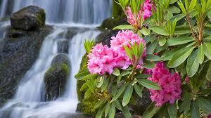 صور ورد طبيعي 2020 ورود طبيعية رومانسية Flowers Wallpapers Hd