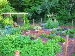 raised bed garden design how to layout