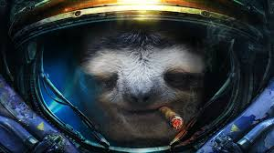 sloth wallpapers top free sloth