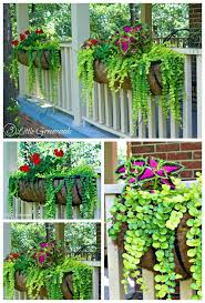The Best Plants For Hanging Baskets On Front Porches Plants For Hanging Baskets Cool Plants Porch Landscaping