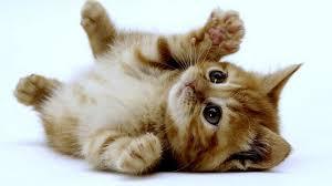 very cute kittens wallpaper 9699 full