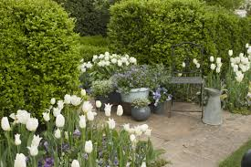 Create A Living Fence With Evergreens P Allen Smith