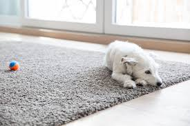 pet sns from carpet home remes