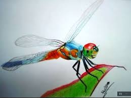 Pin by Myrna Jackson on Dragon fly | Color pencil drawing, Pencil ...