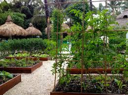 summer gardening in south florida