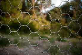 Chicken Wire Fence Stock Photo Download Image Now Istock