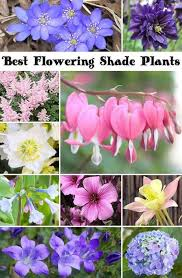 shade plants flowering shade plants