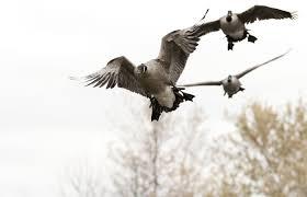 best 43 duck hunt desktop background