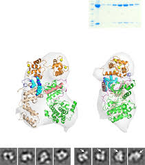 Perturbation of the interactions of calmodulin with GRK5 using a natural  product chemical probe