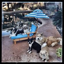Pool Fencing For Dogs Ensuring Their Safety Omst