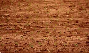 clay soil tips for amending