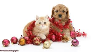 48 cute puppy and kitten wallpapers