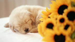puppy wallpaper 1920x1080 46576
