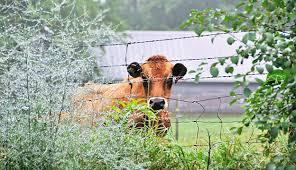 6 Options For Farm Fences Hobby Farms