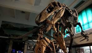 El paraíso de la paleontología que batalla por sobrevivir - El Nuevo Día