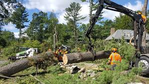 The Perks of Hiring a Tree Removal Service – World Congress of ...