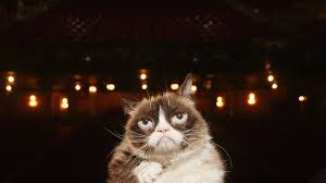 Grumpy Cat Dies After Infection | Time