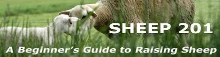 Sheep 201 Feeding And Watering Equipment