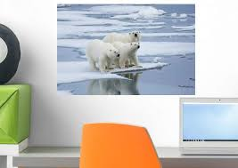 Amazon Com Wallmonkeys Fot 25148003 18 Wm208971 Polar Bear Yearling Cubs Peel And Stick Wall Decals 18 In W X 12 In H Small Home Kitchen