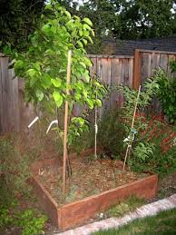 backyard orchard raised bed plantings