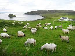 Scottish Landscape With Sheep Stock Photo, Picture And Royalty ...