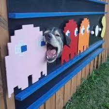 Family Decorates Dog S Fence Window The Dodo