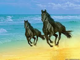 horses wallpaper 15705243 fanpop