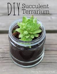 diy succulent terrarium family food