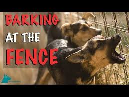 How To Stop Your Dog Barking At The Fence Youtube