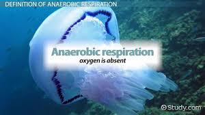 anaerobic respiration definition