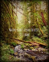 forest landscape nature photography nature quote prints west