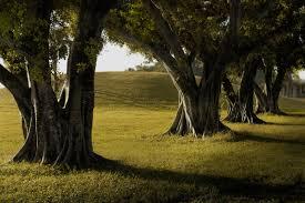 Papel de parede : luz solar, Árvores, panorama, floresta, Pôr do ...