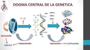Dogama de la genetica