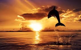 صور غروب الشمس منظر بدهشك من روعة جمالة نايس