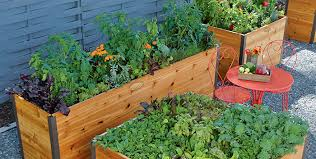 guide to elevated raised beds