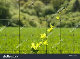 Plant Climbing On Wire Fence Against Stock Photo Edit Now 1019362609