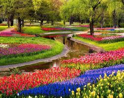 assorted color tulip flower