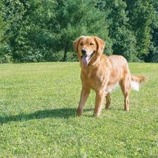 Ultimate Guide For The Best Wireless Fence For Large Dogs Blogging Hub
