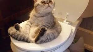 قطط مضحكة اجمل الكائنات الرقيقة صباح الورد