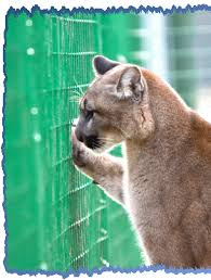Fences To Deter Mountain Lions