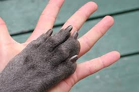how to trim your dog s nails and avoid