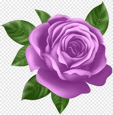 الوردي روز الأرجواني اللون البنفسجي القصاصات الفنية Png